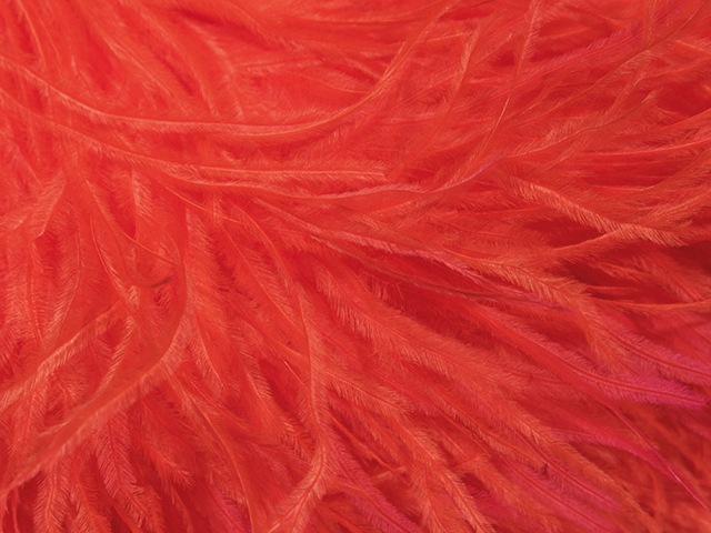 OSTRICH FEATHER FRINGE TANGO FLARE